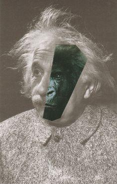 Annalynn_Hammond_les_grands_singes_Einstein_dans_la_brume.jpg (1000×1567)