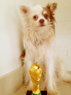 Lily... wins the #WorldCup too!