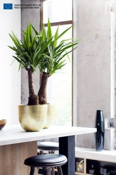 Liven up your home with this charming evergreen