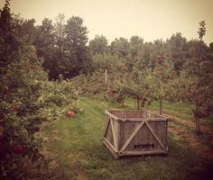 The views at Rockburn Orchards. Apple Picking  Rockburn, Quebec