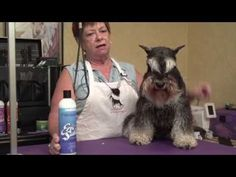 Miniature Schnauzer Grooming Video with Carole Weinberger - YouTube
