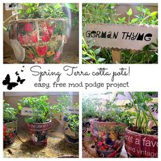 #mod #podge #spring terra cotta pots.  Great gifts for Mom, sis, teachers..anyone to make them smile.