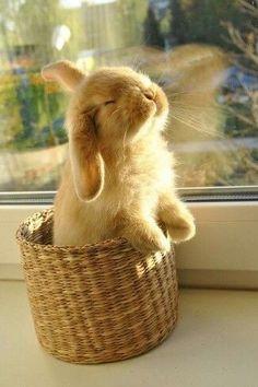 Bunny sunbathing