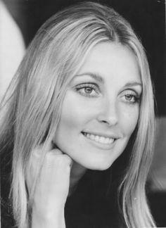 Vintage photo of Portrait of Sharon Tate. Sharon Tate, Charles Manson, Divas, Roman Polanski, Vintage Hollywood, Hollywood Glamour, Hollywood Icons, Classic Beauty, Iconic Beauty