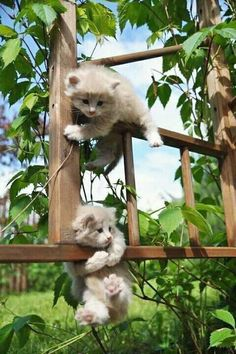 Kittens climb on garden frame