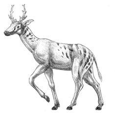 Climacoceras (Artiodactyla: Giraffoidea: Climacoceratidae) Mioceno África, Europa by dustdevil on deviantART