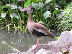 Our Life in Medellin Colombia: Pajaros (Birds) 10 new Birds added to my blog