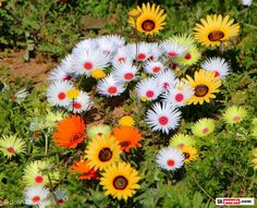 Wild flowers in Namaqualand Africa Art, Desert Plants, West Coast, Wild Flowers, Planting Flowers, South Africa, Succulents, African, Paintings
