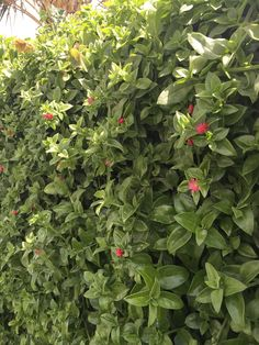 Green wall- doha