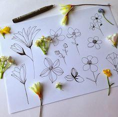 Flora Waycott - floral studies