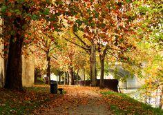 Chemin des Remparts - Paysage d'automne à #Metz (Lorraine, France)