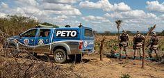NONATO NOTÍCIAS: Polícia Militar erradica roça com mais de 120 mil ...