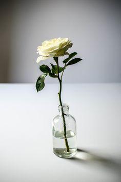 'Patience' Garden Rose | ROSE & IVY Journal