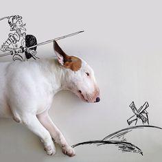 Rafael-Mantesso-Bull-Terrier (8)