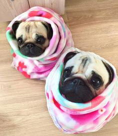 """Warming up on a cold Sunday 🙈 Cute Pugs, Cute Funny Animals, Cute Baby Animals, Funny Dogs, Animals And Pets, Funny Cute, Pug Love, I Love Dogs, Mundo Animal"
