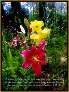"""Matthew 6:28-29. """"Consider the lilies of the field, how they grow, they neither toil nor spin, yet I tell you even Solomon in all his glory was not arrayed like one of these."""""""