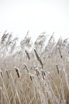 dutch winter landscape - Steve's Digicams Forums