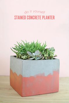 DIY Stained Concrete Planter
