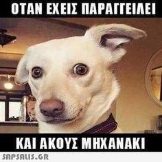 16 Ideas funny photos of dogs pets Epic Fail Pictures, Funny Animal Pictures, Funny Photos, Funny Animals, Cute Animals, Funny Cute, Hilarious, Greek Memes, Dog Memes