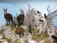 Naturmuseum Neuberg - Sammlung Schliefsteiner #naturmuseum #neubergandermuerz #naturpark #muerzeroberland #naturparkmuerzeroberland #Familie #Kinder #Sonderausstellung #visitsteiermark #visithochsteiermark Goats, Moose Art, Animals, Culture, Kids, Animales, Animaux, Animal, Animais
