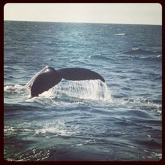 We like...Whale watching off Queensland's coast