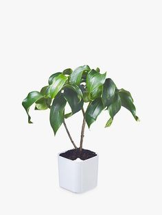 Orthex Eden Self-Watering Planter, Small