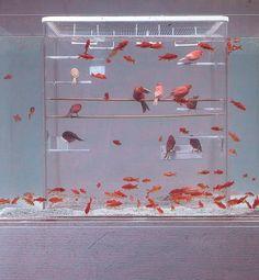 Creative amazing and weird aquarium fish tank Diskus Aquarium, Aquarium Design, Fish Aquariums, Tanked Aquariums, Pet Bird Cage, Bird Cages, Modern Fish Tank, Conception Aquarium, Fish Tank Design