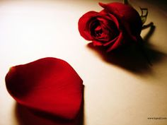 Explore Red Rose Love Wallpaper on WallpaperSafari Red Rose Love, Love Rose Flower, Hd Flowers, Pretty Flowers, Heart Wallpaper Hd, Rose Flower Wallpaper, Rose Wallpaper, Red Rose Pictures, Flower Pictures
