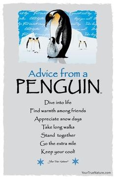 Advice from a Penguin- Postcard- Your True Nature Advice Quotes, Life Advice, Good Advice, Drake Quotes, Advice Cards, Quotes To Live By, Life Quotes, Wisdom Quotes, Affirmation Quotes