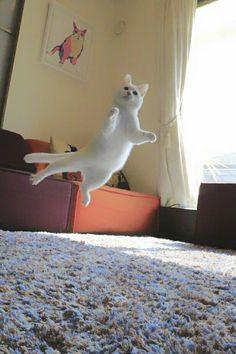 瀬戸にゃん ちさ♢重力無視のミルコのお家 @ccchisa76 4月1日 休日は休日! ぷわん、ぷわん浮いてるミルコと1日中遊ぶ(^ ^)