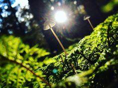 One with nature [1]  _ _ _ _ _ #grafinesse #picturesque #nature #one #gegenlicht #naturelovers #naturpur #forest #bwood #schwammerljagd #stillalive #herbst #atumn #potd
