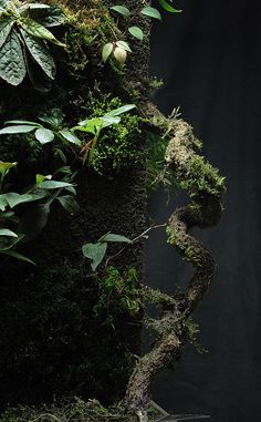 Vivarium - orchidarium | Tumblr