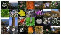 I was out walking in the #bushland yesterday and noticed even more #flowers. Each week it changes and there are so many flowers to learn, that each year I try to get to know one or two a little better. A few years ago, I made this #photomontage of just some of the many flowers, plants and scenes of the walks around #Avalon.  I would like to thank Noel Rutingof #LandArcfor his help with species identification. I can thoroughly recommend the following books ... Blog: suzipoland.blogspot.com