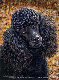 standard poodle portraits - Google Search