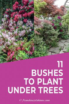 Find out which bushes to plant under trees in the shade garden in your backyard or front yard. These shrubs will help to brighten up your yard. #fromhousetohome #bushes #shade #gardeningtips #gardening #gardenideas Shade Loving Shrubs, Shade Shrubs, Shade Garden Plants, Shade Perennials, Shade Trees, Garden Trees, Garden Bed, Summer Plants, Side Garden