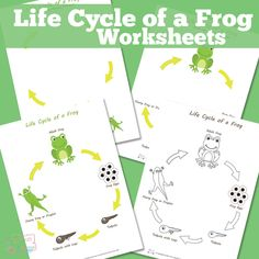 FREE--The Life Cycle of a Frog Worksheets - Frog Printable  Frogs are a great learning subject for kids from preschool to higher grades of elementary school and beyond and they have been for generations!