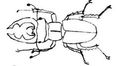 vliegend hert on beetle and crafts