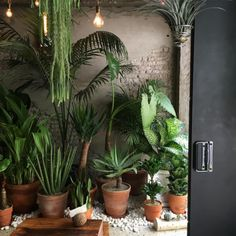 Pin by nikki mualita clark on indoor plants and planters Room With Plants, House Plants Decor, Plant Decor, Plantas Indoor, Decoration Plante, Outdoor Plants, Houseplants, Planting Flowers, Greenery