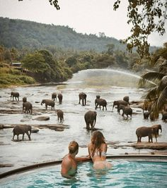 Pinnawala Elephant Orphanage Sri Lanka Photography by Incredible moments! Pinnawala Elephant Orphanage Sri Lanka Photography by Sri Lanka Photography, Travel Photography, Couple Photography, Nature Photography, Places To Travel, Travel Destinations, Places To Visit, Amazing Destinations, Beautiful Pools