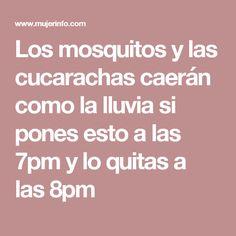 Los mosquitos y las cucarachas caerán como la lluvia si pones esto a las 7pm y lo quitas a las 8pm