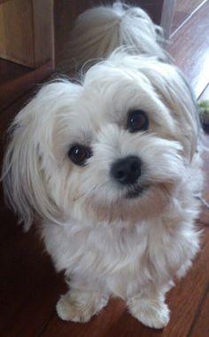 Cute !! My dog !!!!