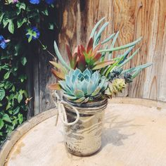 Succulent garden-Mason jar-Rustic mirror like finish w/ twine bow