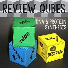 Biology students LOVE Review Qubes! This set is all about DNA structure, replication, and protein synthesis. SO. MUCH. FUN.