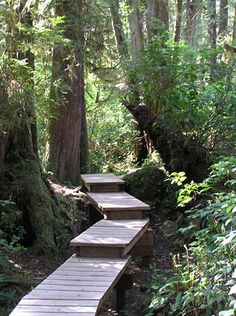 Wooden trail down to Schooner Cove. A beautiful walk through the forest. Tofino, B. Love this place! Sunshine Coast, Beautiful Places To Visit, Places To See, Forest Path, Island Tour, Vancouver Island, Hiking Trails, Canada, Victoria