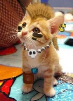 Mohawk kitty Punk, Teddy Bear, Image, Toys, Animals, Cat, Animales, Animaux, Toy