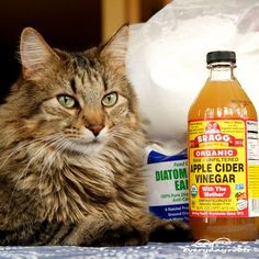 5 Natural Ways to Get Rid of Fleas on Cats- a great list of natural flea remedies for cats!