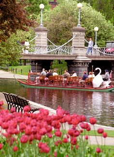 "Boston - Public Gardens ""Swan Boat & Tulips"". Went on boat; love them. Statue near on make way for ducklings"