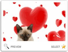 pets can celebrate holidays with sloppy kiss cards the most adorable animated ecards online ecards online and products