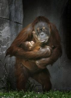 Thursday's stroll in the sunshine gave Memphis Zoo visitors a rare glimpse of orangutan baby Rowan