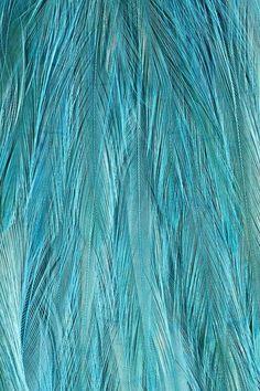 Tiffany plume iPhone 6s Plus wallpaper